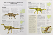 Cretaceous iguanodontids-hadrosaurids connection