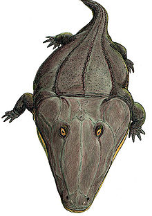 Mastodonsauridae