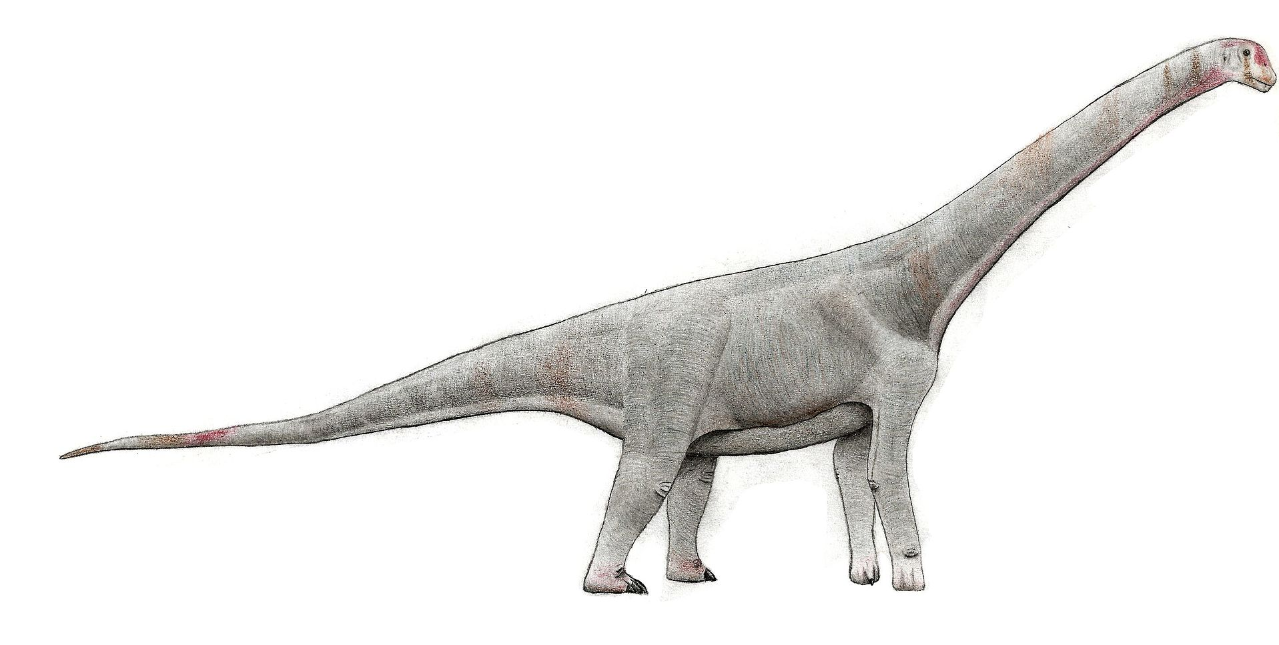 Chubutisaurus