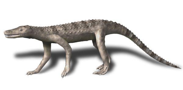 Dibothrosuchus