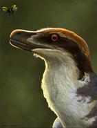Acheroraptor temertyorum head illustration