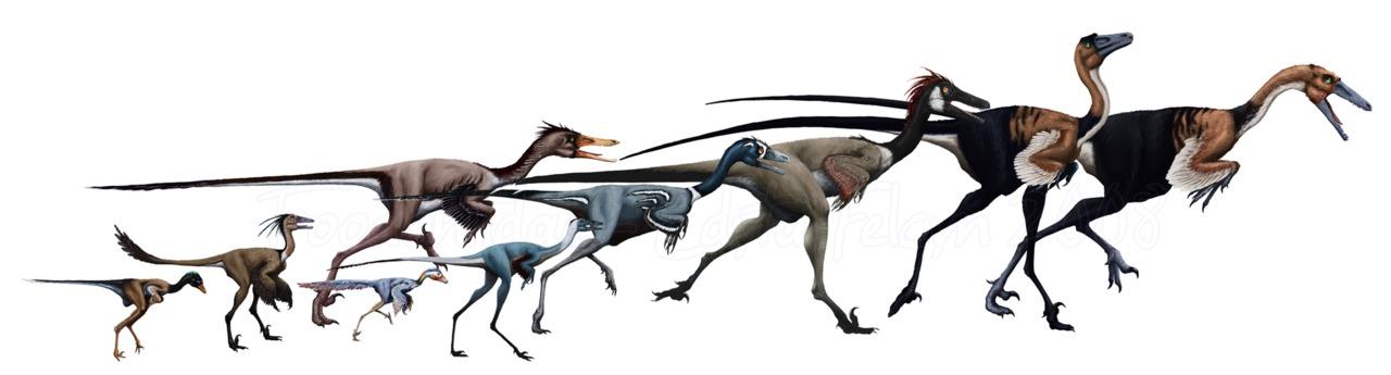 Maniraptoriformes