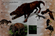 Who was top predator after T-Rex