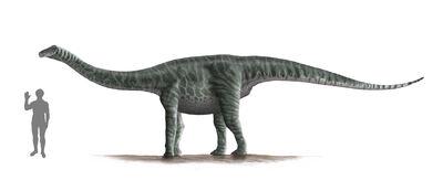 Ferganasaurus.jpg