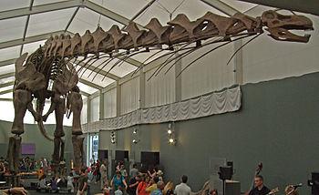 Dinosaur size comparison