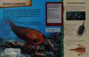 Deadly scorpion