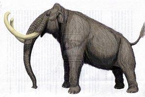 Kikinda mammoth