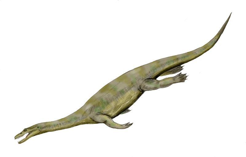 Nothosaurus/Gallery