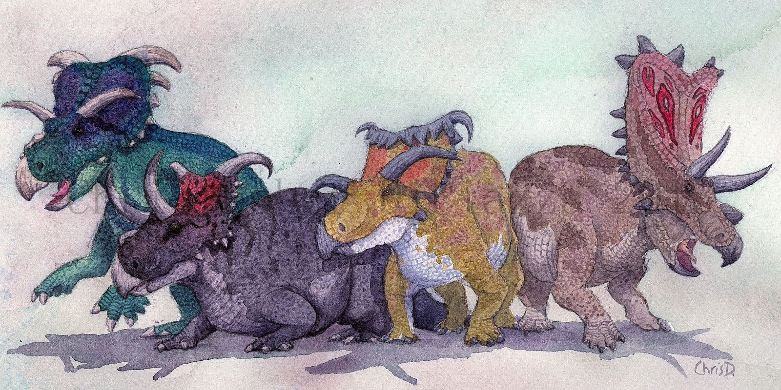 Ceratopsids/Gallery