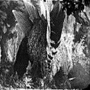 Stego1933