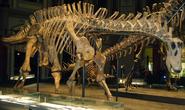 Dicraeosaurus skeleton
