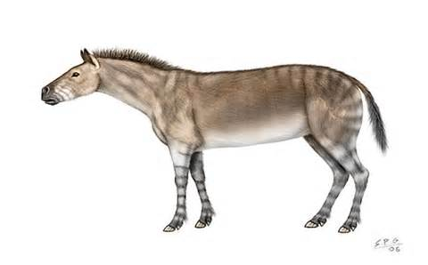 Anchitherium