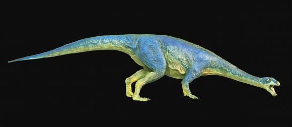 Massospondylidae