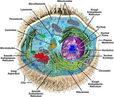 Eukaryote.jpg