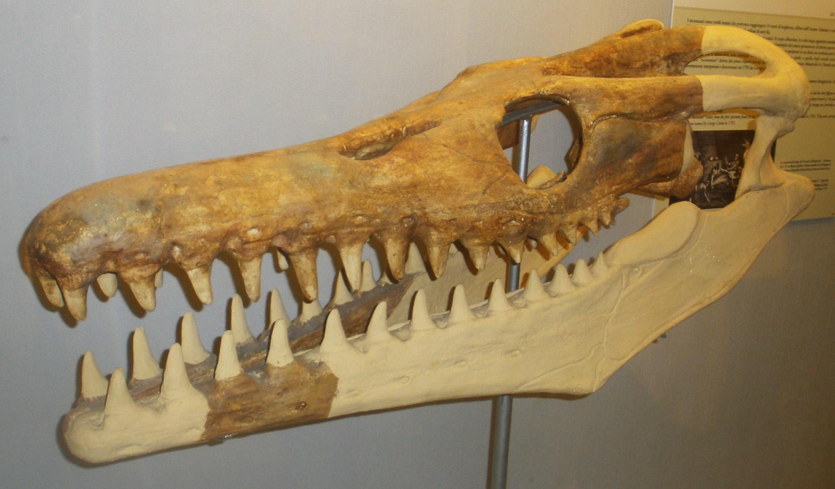 Goronyosaurus