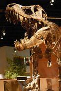 Tyrannosaurus-prehistoric-life