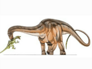 JPI Magyarosaurus