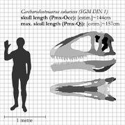 Carcharodontosaurus skull diagram.jpg