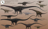 Sauropods of the Morrison