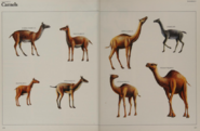 Camel collection