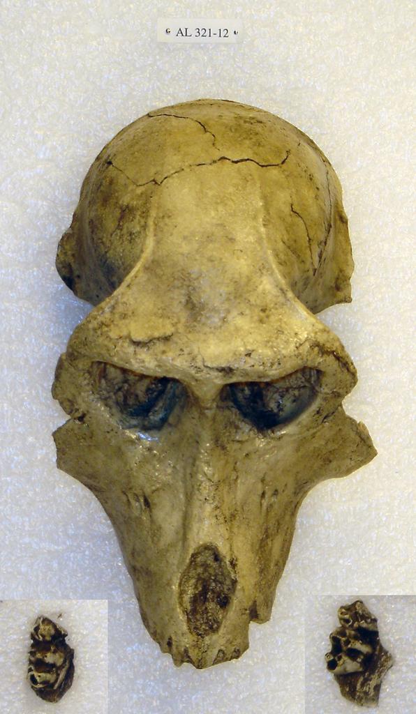 Theropithecus darti