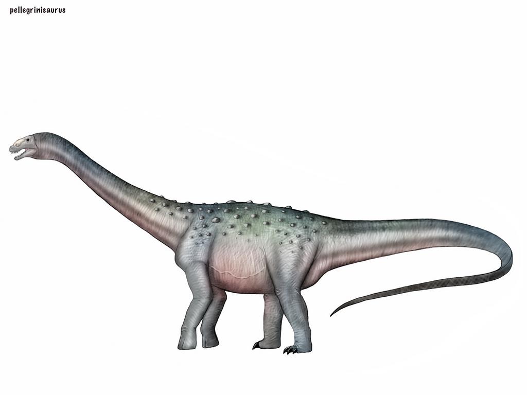 Pellegrinisaurus