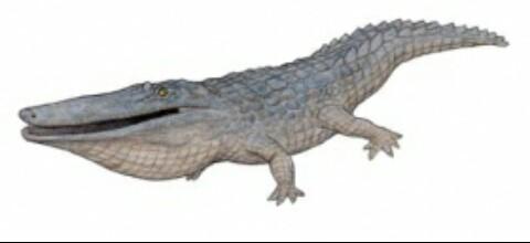 Mourasuchus