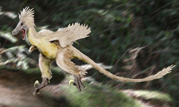 Linheraptor