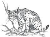 Lynx issiodorensis