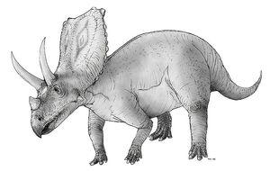 800px-Sketch chasmosaurus.jpg