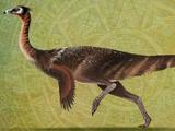 Saltillomimus