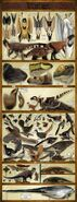 Fauna of Liaoning Formation