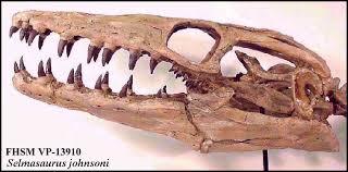 Selmasaurus