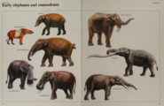 Early elephant and mastodon collection