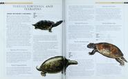 Turtles, Tortoises and Terrapins 1
