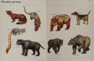 Mustelid and bear collection