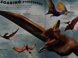 Tupandactylus