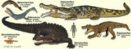 CrocodylomorphModels