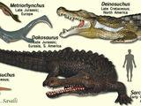 Crocodylomorpha