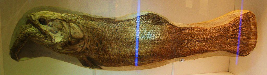 Calamopleurus