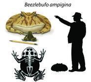 Beezlebufo-collage2