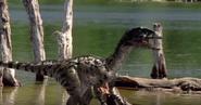 Ww creatures acheroraptor temertyorum by wdghk de714l3