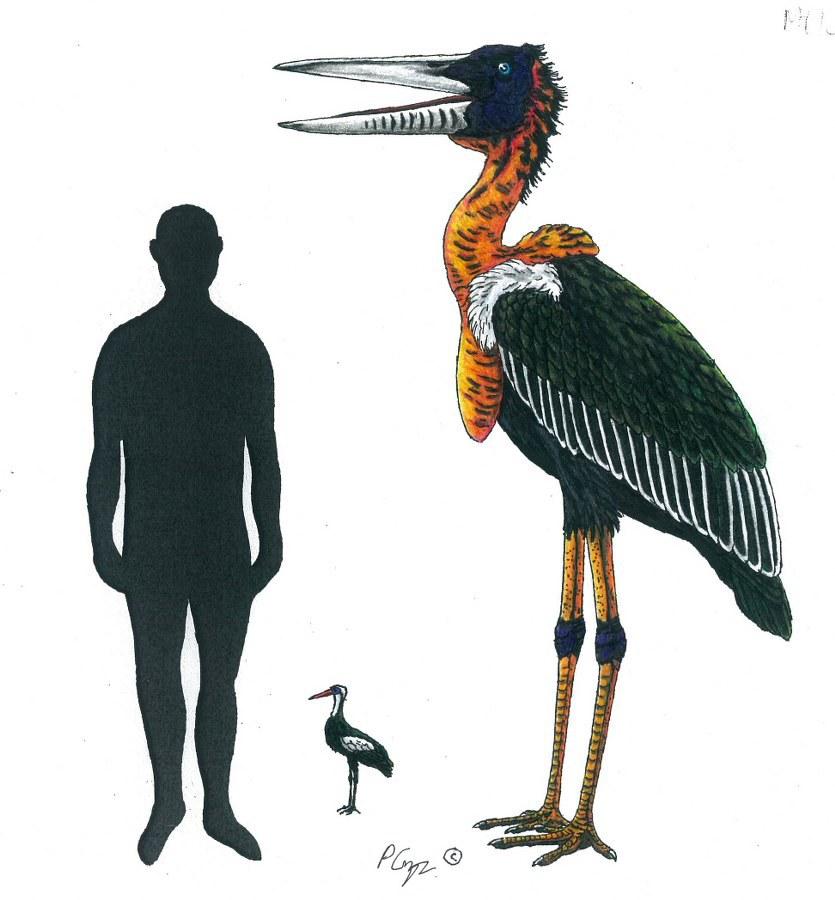 Palaeoephippiorhynchus