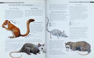 Primitive Mammals 2