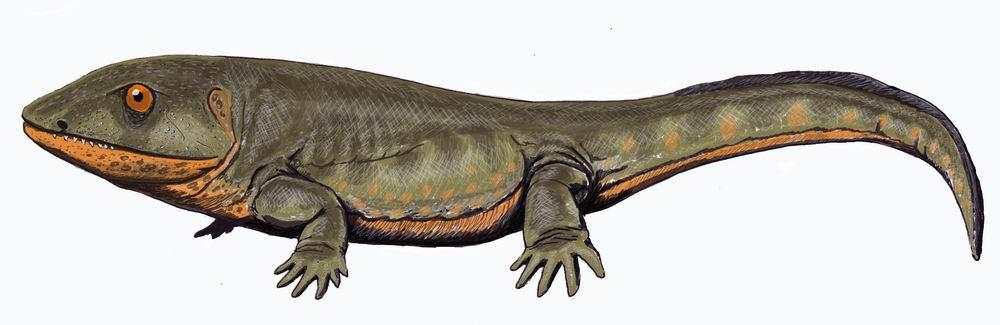 Albanerpetontidae