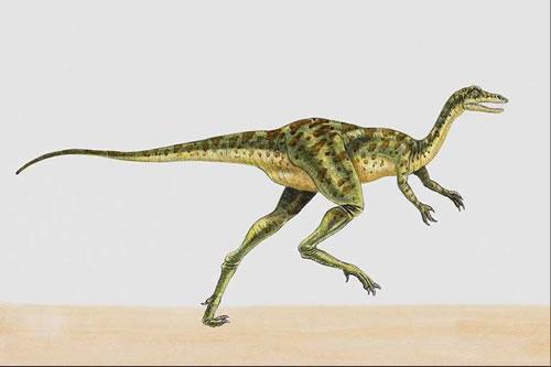 Primitive Coelurosaurs