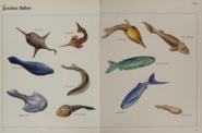 Jawless Fish collection