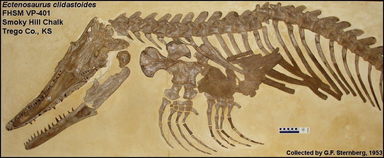 Ectenosaurus