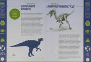 Gryposaurus and Linhenykus