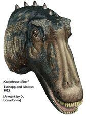 Kaatedocus head.jpg